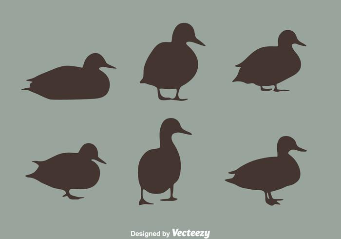 Loon and silhouette vector