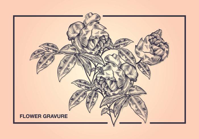 Blumen-Gravur-Art vektor