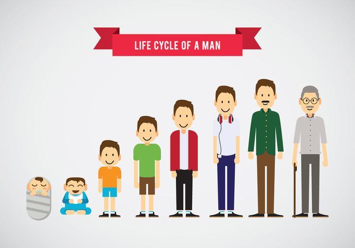 Livscykel av en man vektor