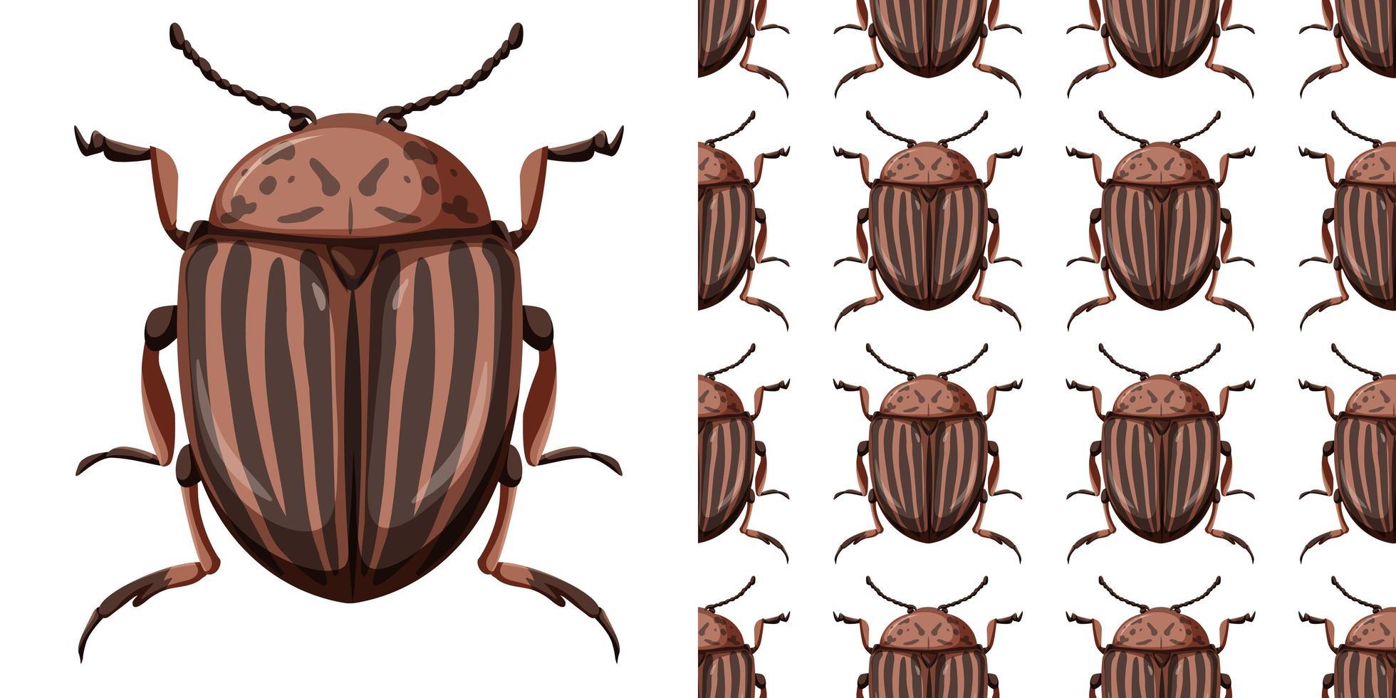 colorado beetle insekt och sömlös bakgrund vektor