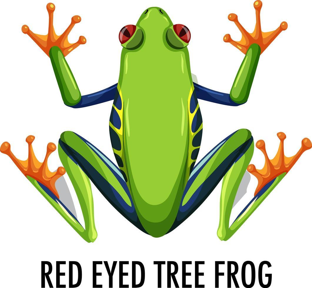 rödögd trädgroda isolerad på vit bakgrund vektor