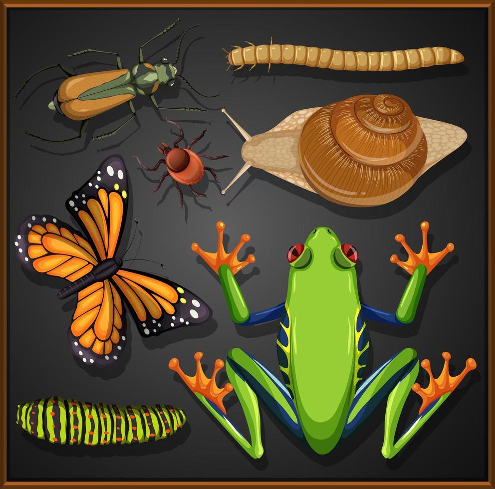 uppsättning olika insekter på svart bakgrund vektor