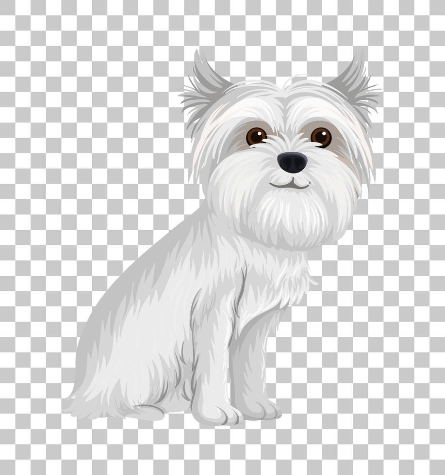 vit australisk terrier i sittande ställning seriefigur isolerad på transparent bakgrund vektor