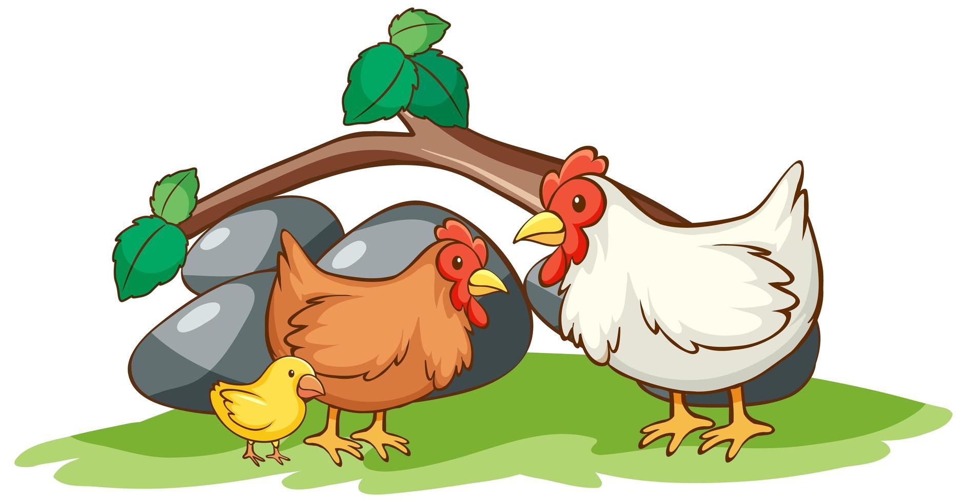 isolerad bild av kycklingar i trädgården vektor
