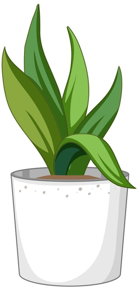 grüne Pflanze in einem weißen Topf lokalisiert auf weißem Hintergrund vektor