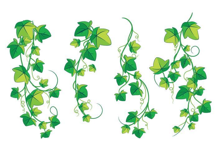 Klättring Poison Ivy Plant isolerad på vit bakgrund vektor