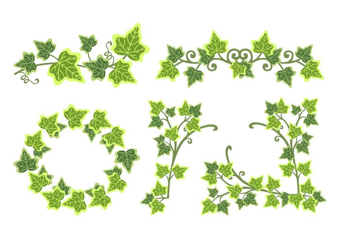 Gifta murgröna blad vektor gräns illustration