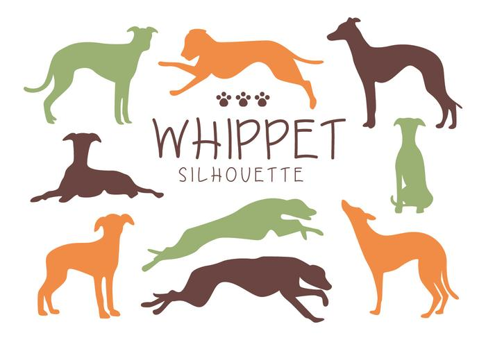 Whippet Dog Silhouette Vectors