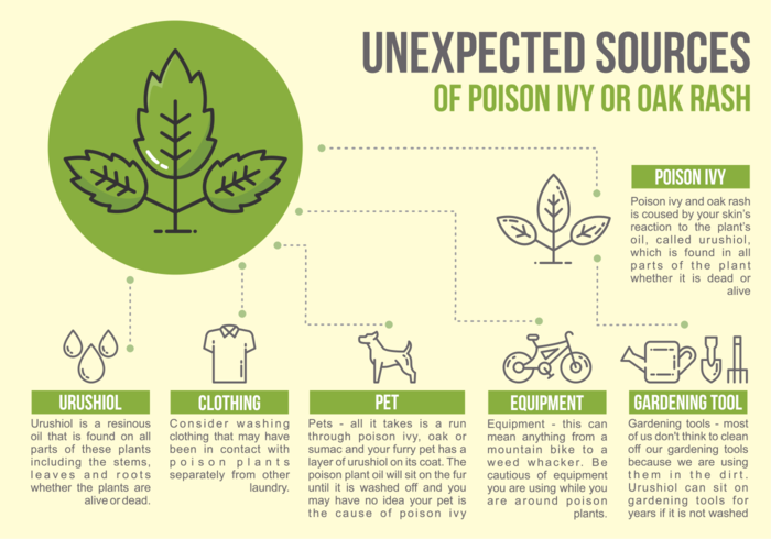 Giftig ivy infographic vektor