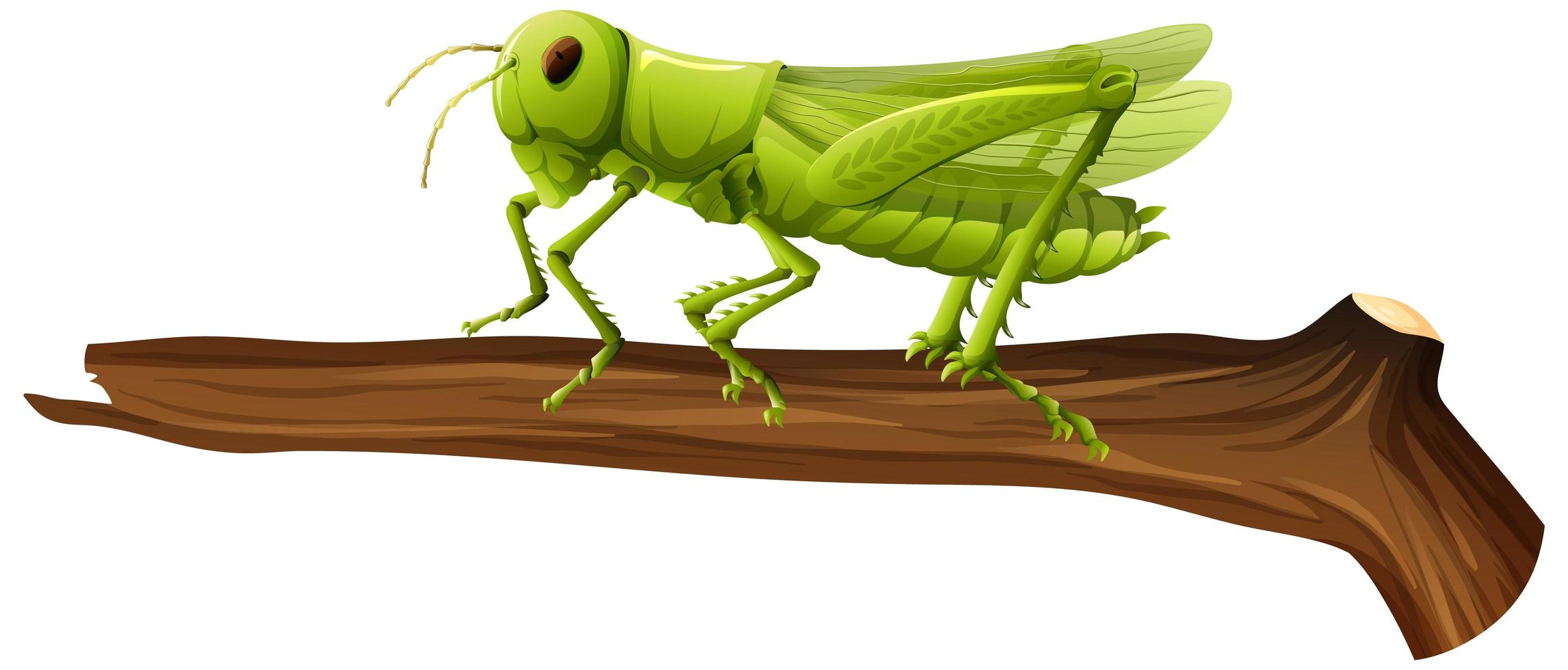 Nahaufnahme der Heuschrecke auf einem Zweig auf weißem Hintergrund vektor