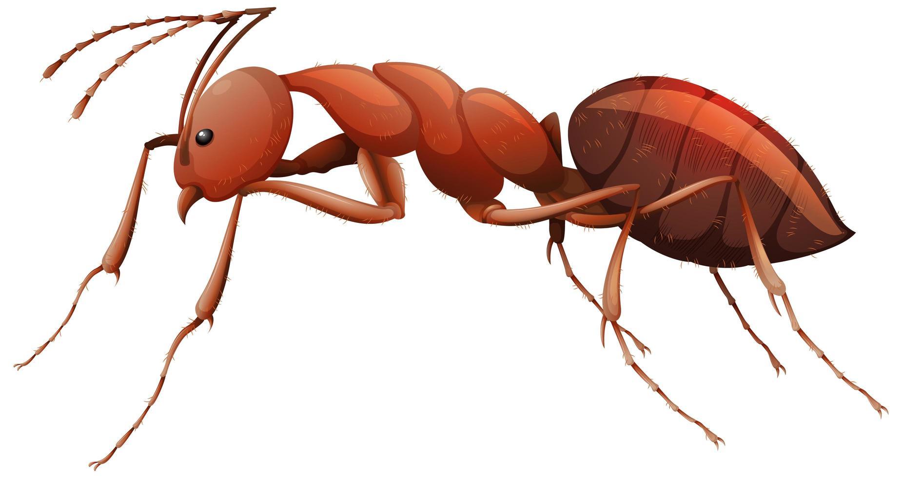 Nahaufnahme der roten Ameise im Karikaturstil auf weißem Hintergrund vektor