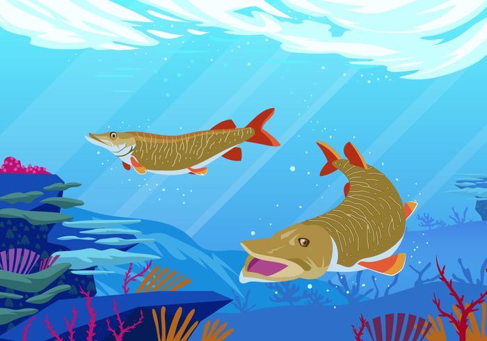Muskie fisk i sjön vektor