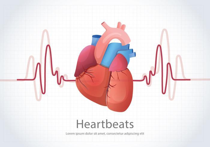 Human Heartbeats Illustration Bakgrund vektor