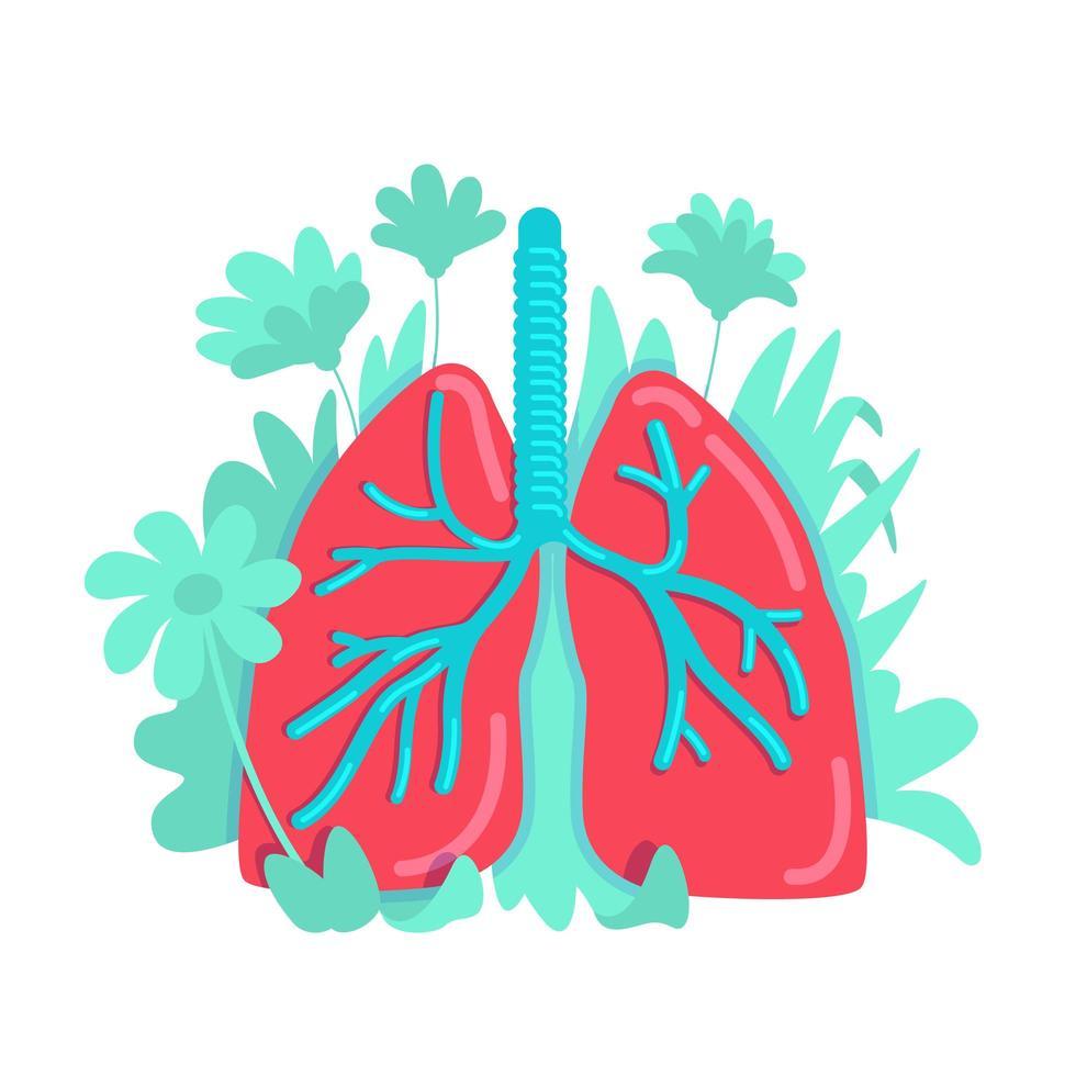 anatomisches Lungensystem vektor