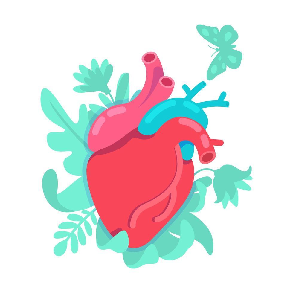 anatomiskt hjärtsystem vektor