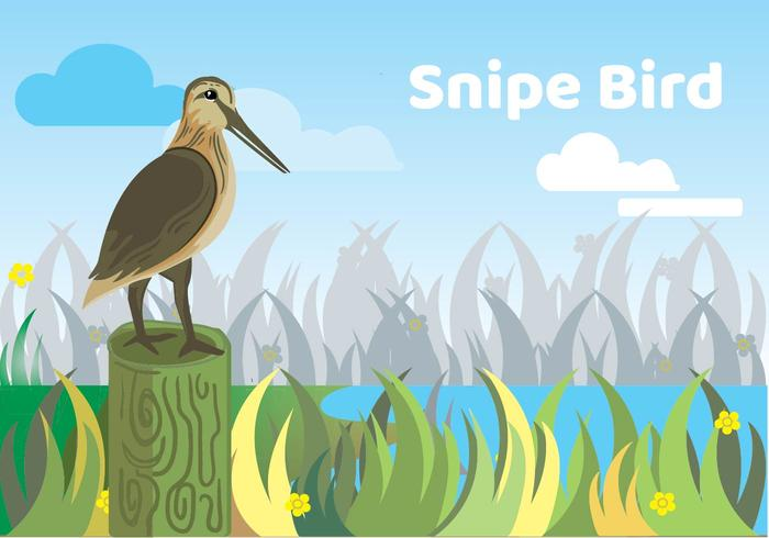 snipe fågel illustration vektor