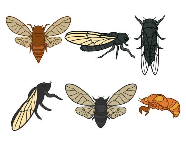 Cicada vektor uppsättning