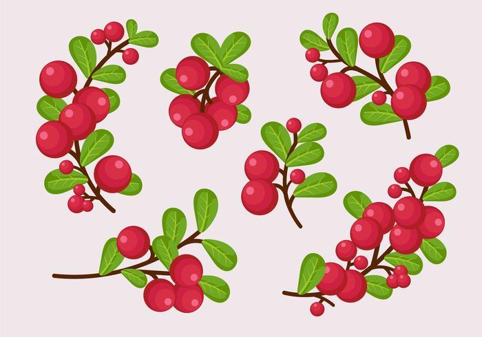 Cranberries Zweig mit Blättern vektor