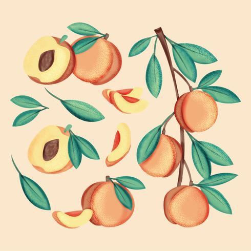 Vektor handgezeichnete Pfirsiche