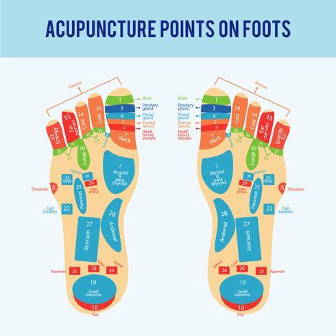 Akupunktur-Fuß-Schema-Vektor vektor