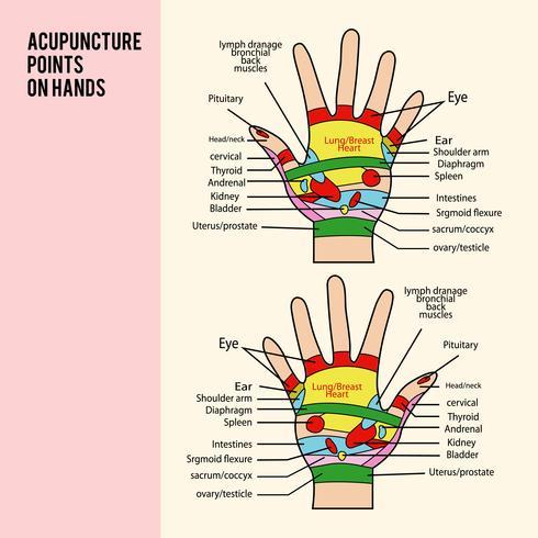 Akupunkturpunkt auf Händen Vektor