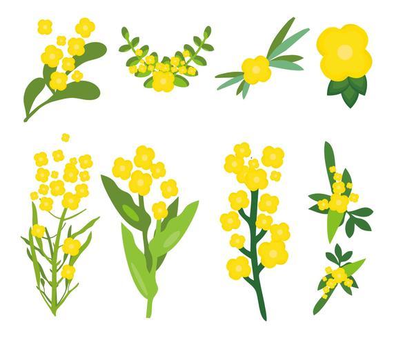 Freier Canola-Blumen-Vektor vektor