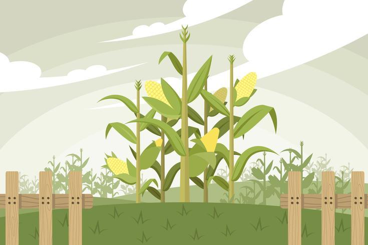 Gratis Corn Stalk Vector