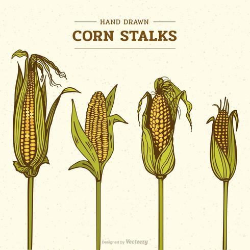 Färgad Hand Drawn Corn Stalks Vektor Illustration