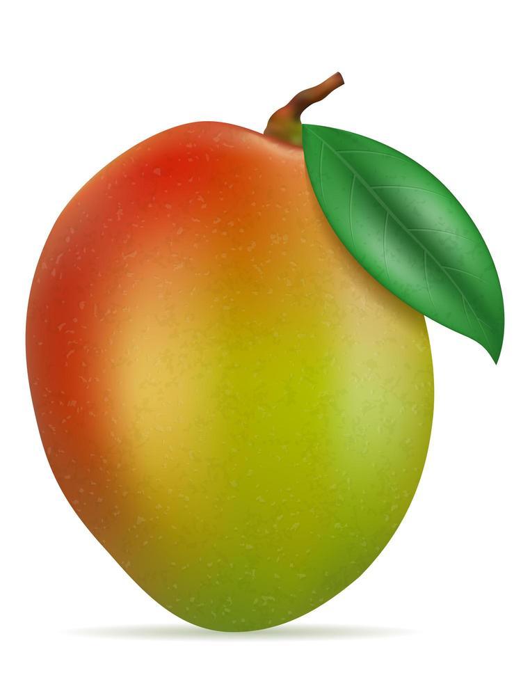 Mango frische reife exotische Früchte vektor