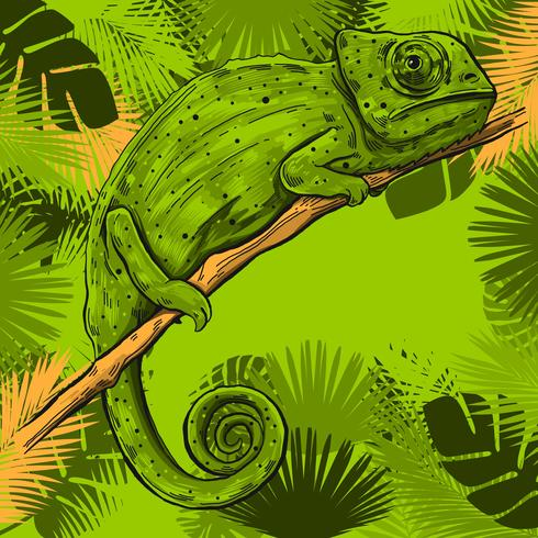 Chamäleon auf einer Niederlassung des tropischen Blatt-Rahmens vektor