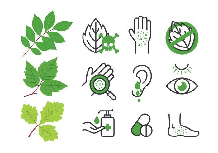 Poison Ivy Oak Sumach Blätter und Krankheit Icon Set vektor