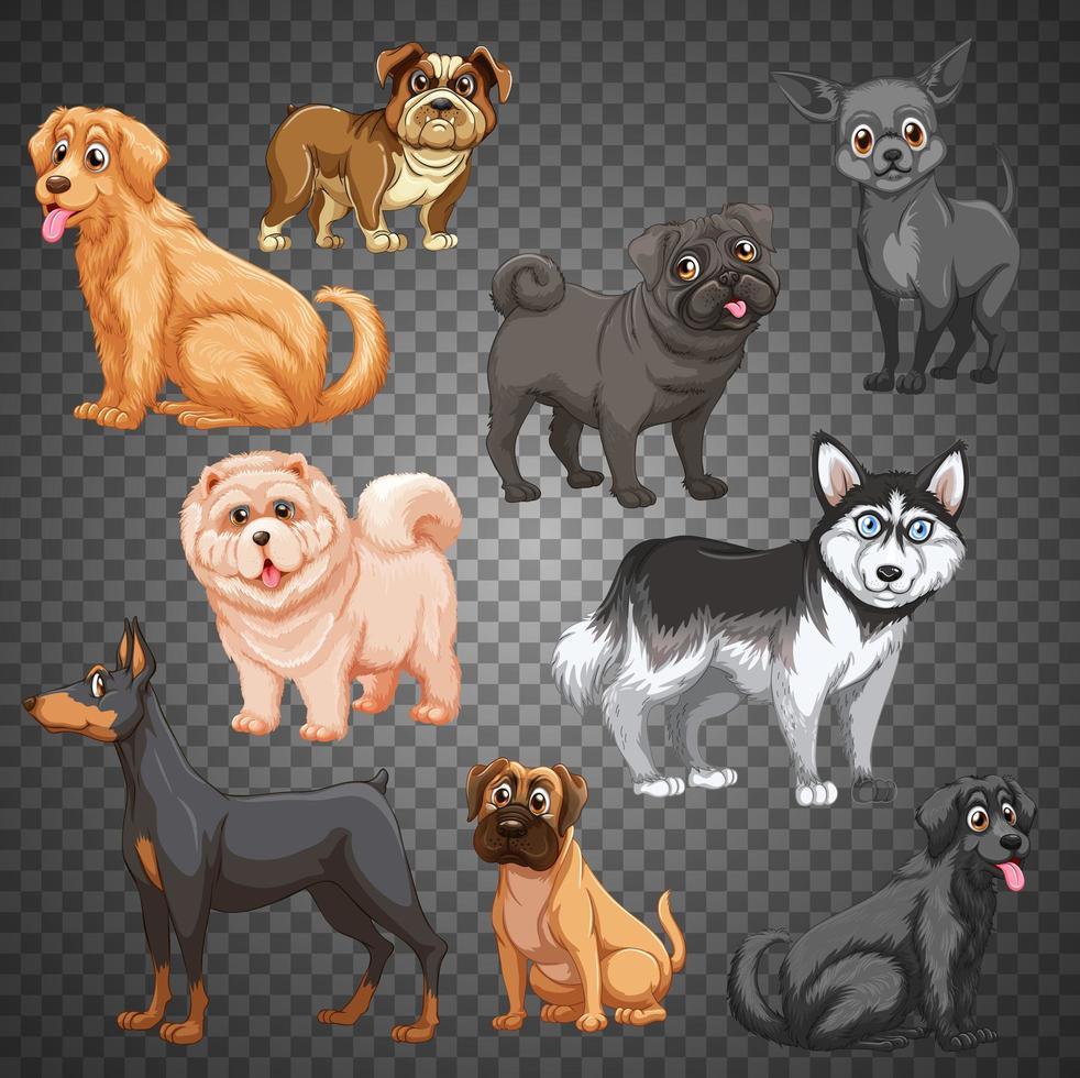 uppsättning av olika hundar isolerade vektor