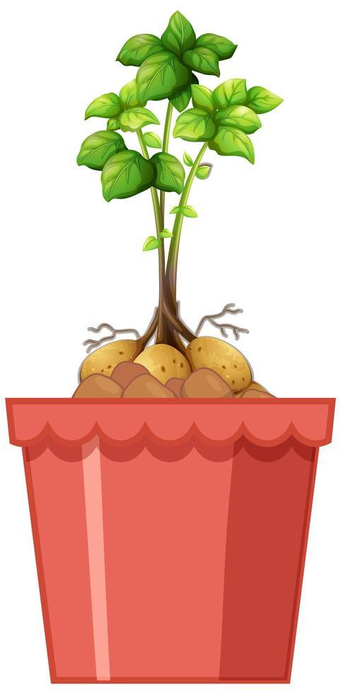 Kartoffeln mit dem Stiel und den Blättern im roten Topf lokalisiert auf weißem Hintergrund vektor
