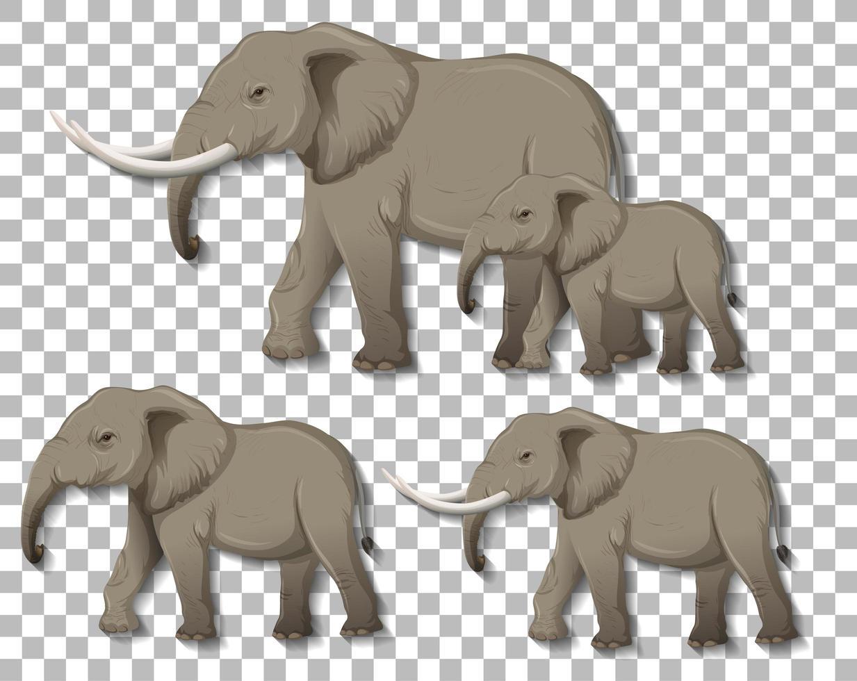 uppsättning isolerade elefanter på transparent bakgrund vektor