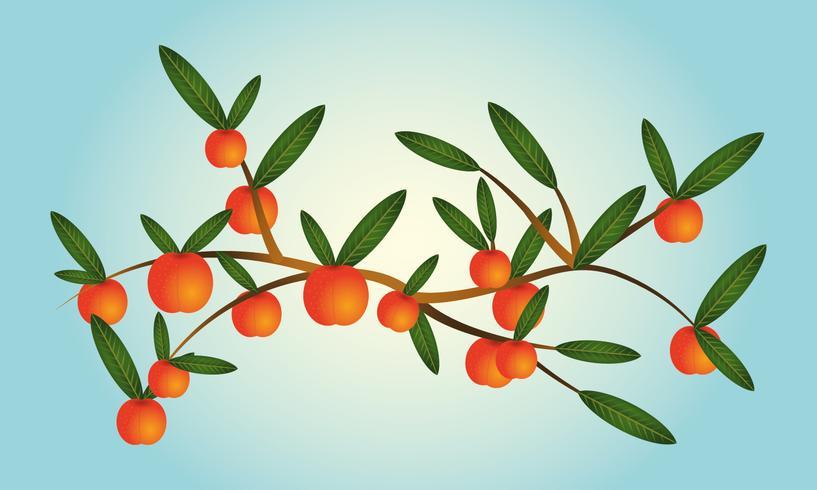 Grenar av persika träd vektor