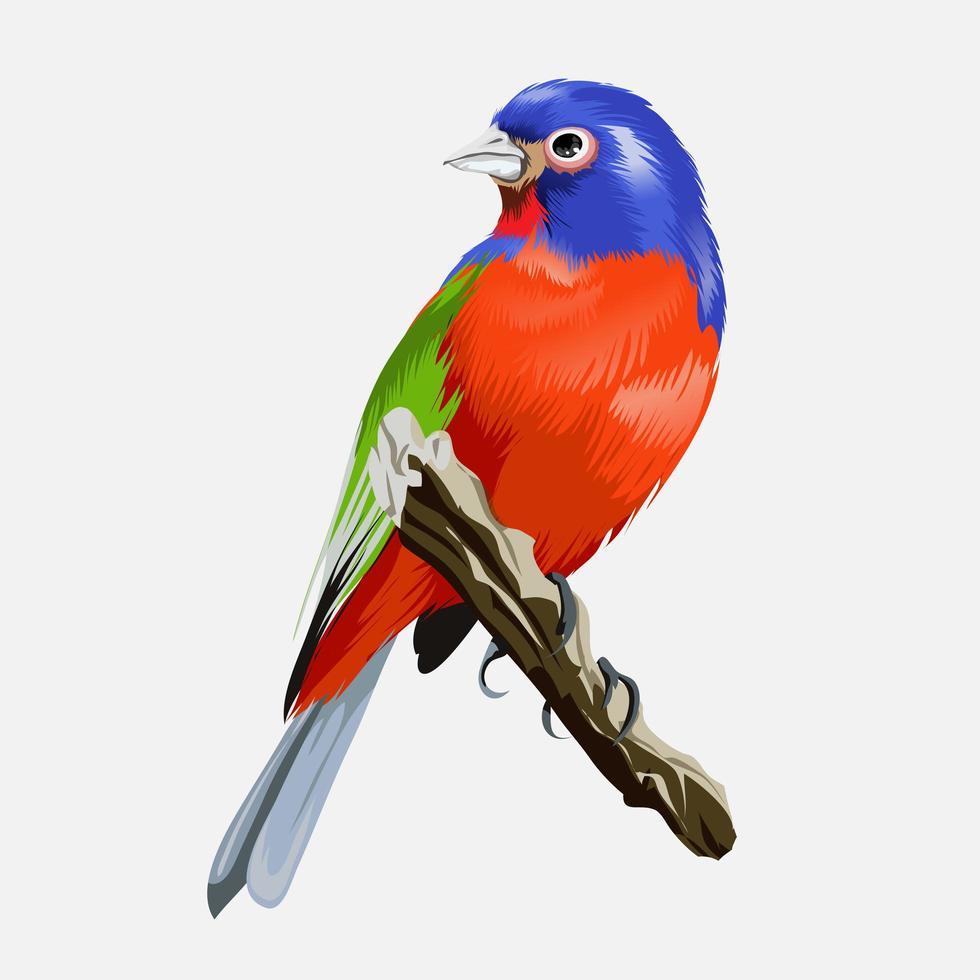 liten flerfärgad tropisk ljus fågel med en med ett vackert rött bröst vektor