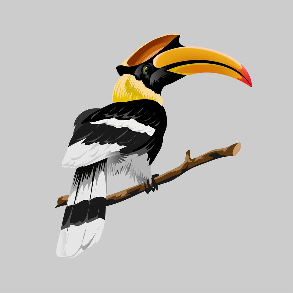 hornbill ljus tropisk fågel med en otrolig gul näbb vektor