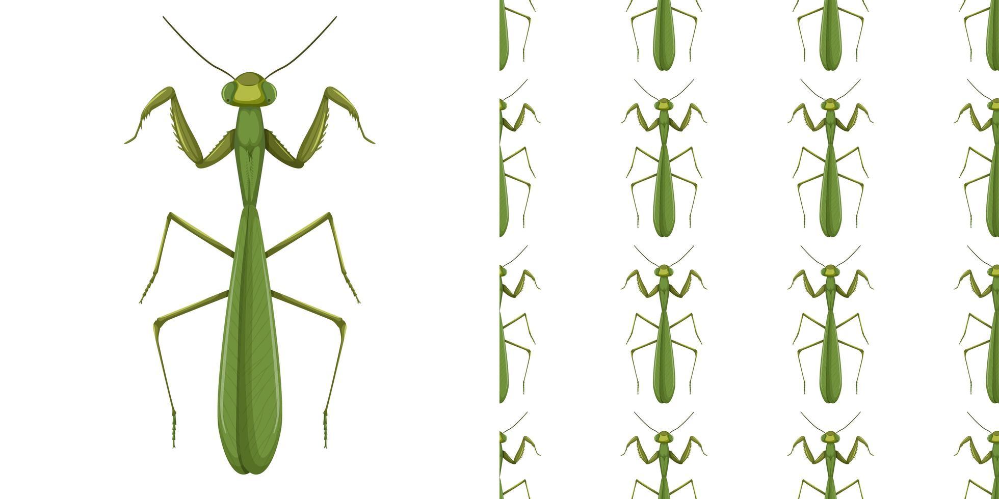 mantis insekt och sömlös bakgrund vektor