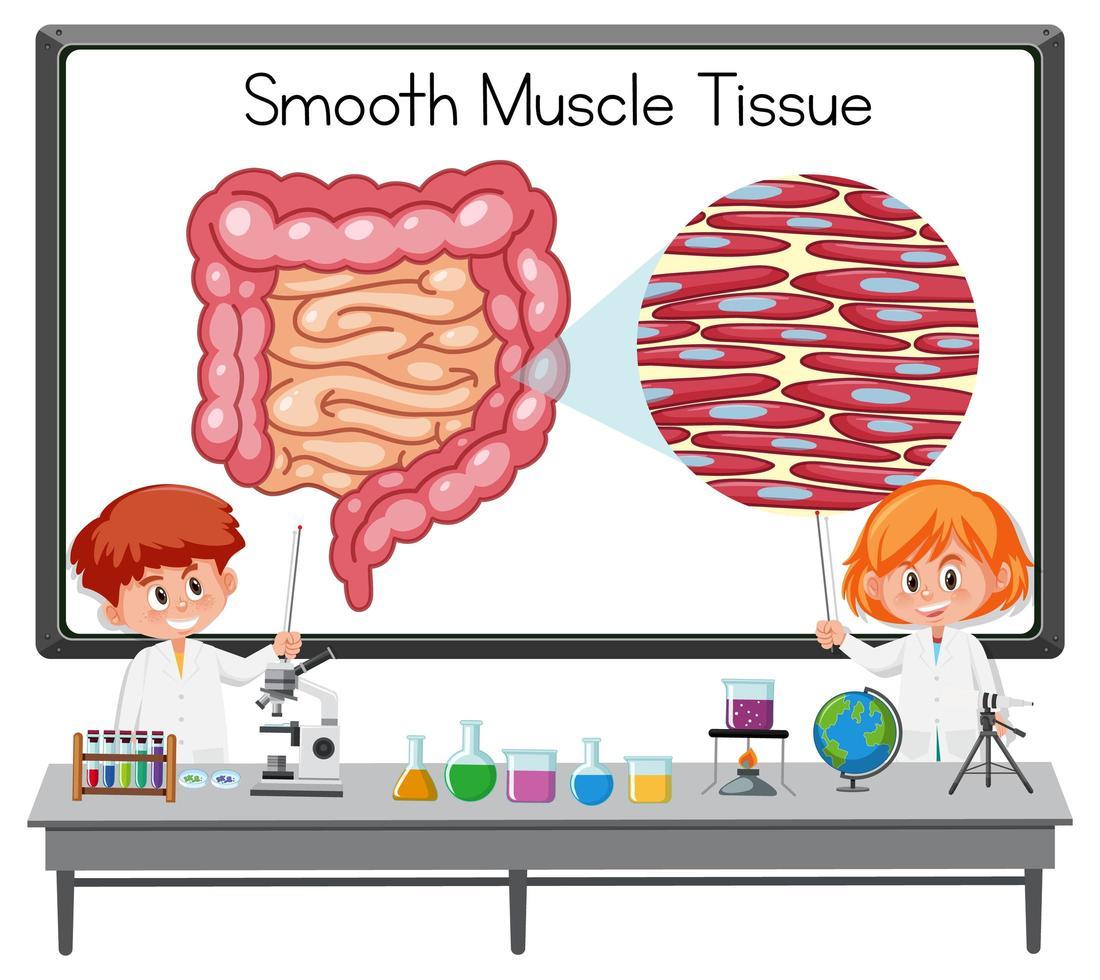 junger Wissenschaftler erklärt glattes Muskelgewebe vor einem Brett mit Laborelementen vektor