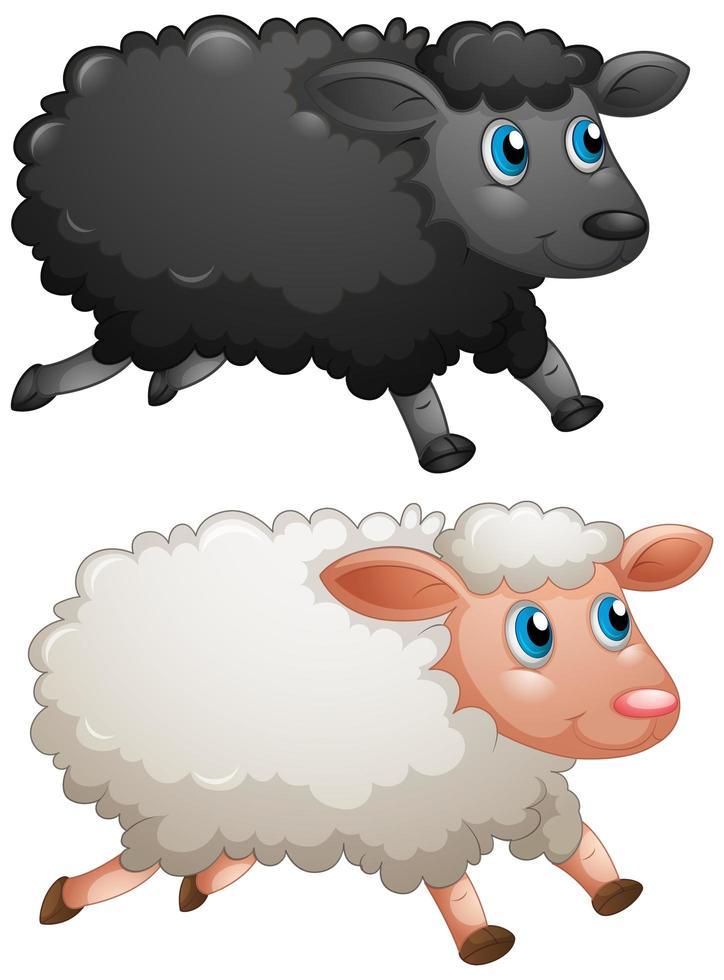 schwarze Schafe und weiße Schafe auf weißem Hintergrund vektor