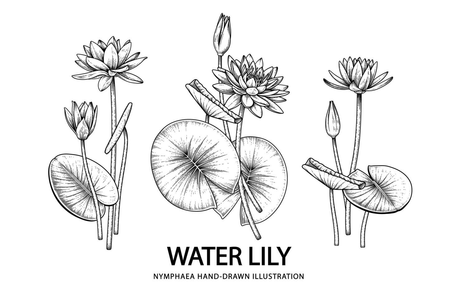 skiss blommig dekorativ uppsättning. vattenlilja blommateckningar. svart linjekonst isolerad på vita bakgrunder. handritade botaniska illustrationer. element vektor. vektor