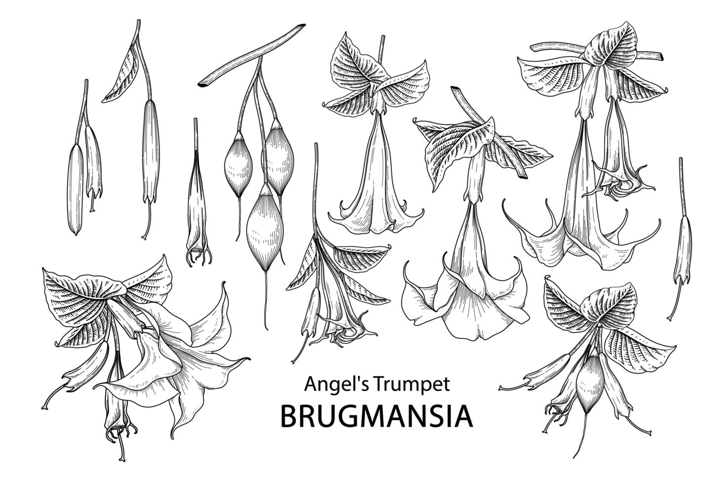 Engel Trompete Blume Brugmansia Zeichnungen Elemente Vektor. vektor
