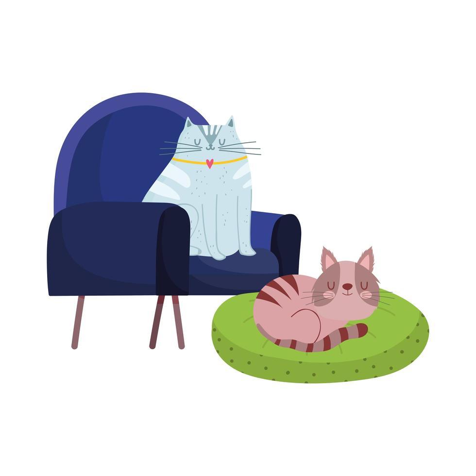 husdjur vilar katter i stol och kudde tecknad isolerad design vektor