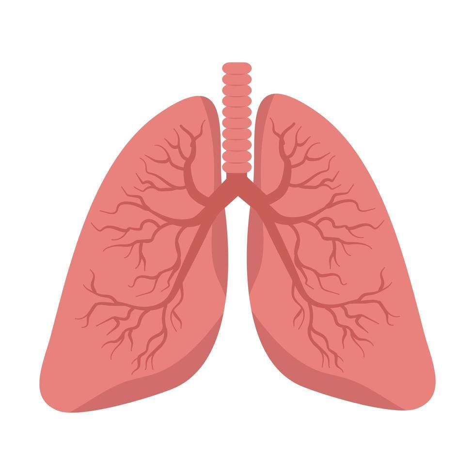 Lungenvektor auf weißem Hintergrund vektor