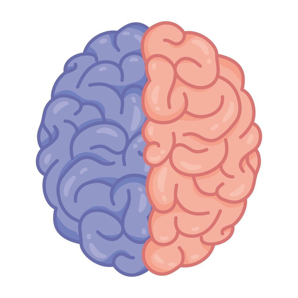 menschliches Gehirn, Symbol für psychische Gesundheit vektor