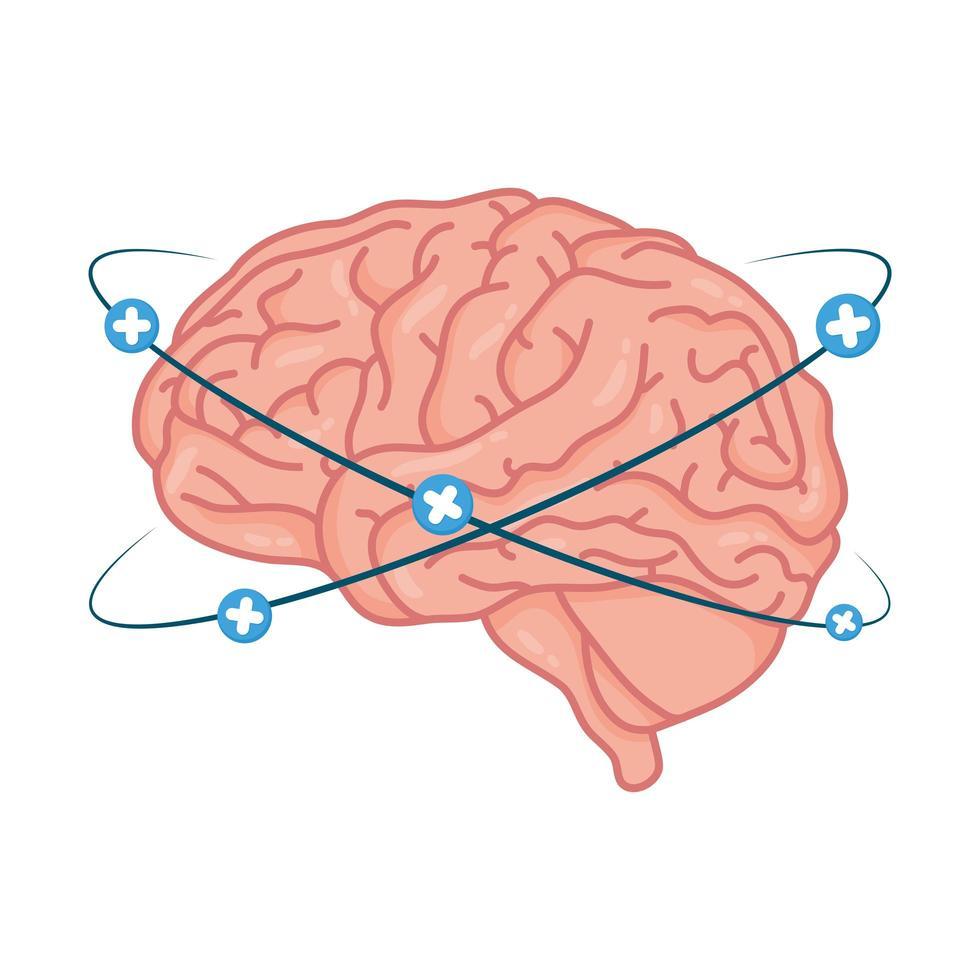 menschliches Gehirn mit Pluszeichen vektor