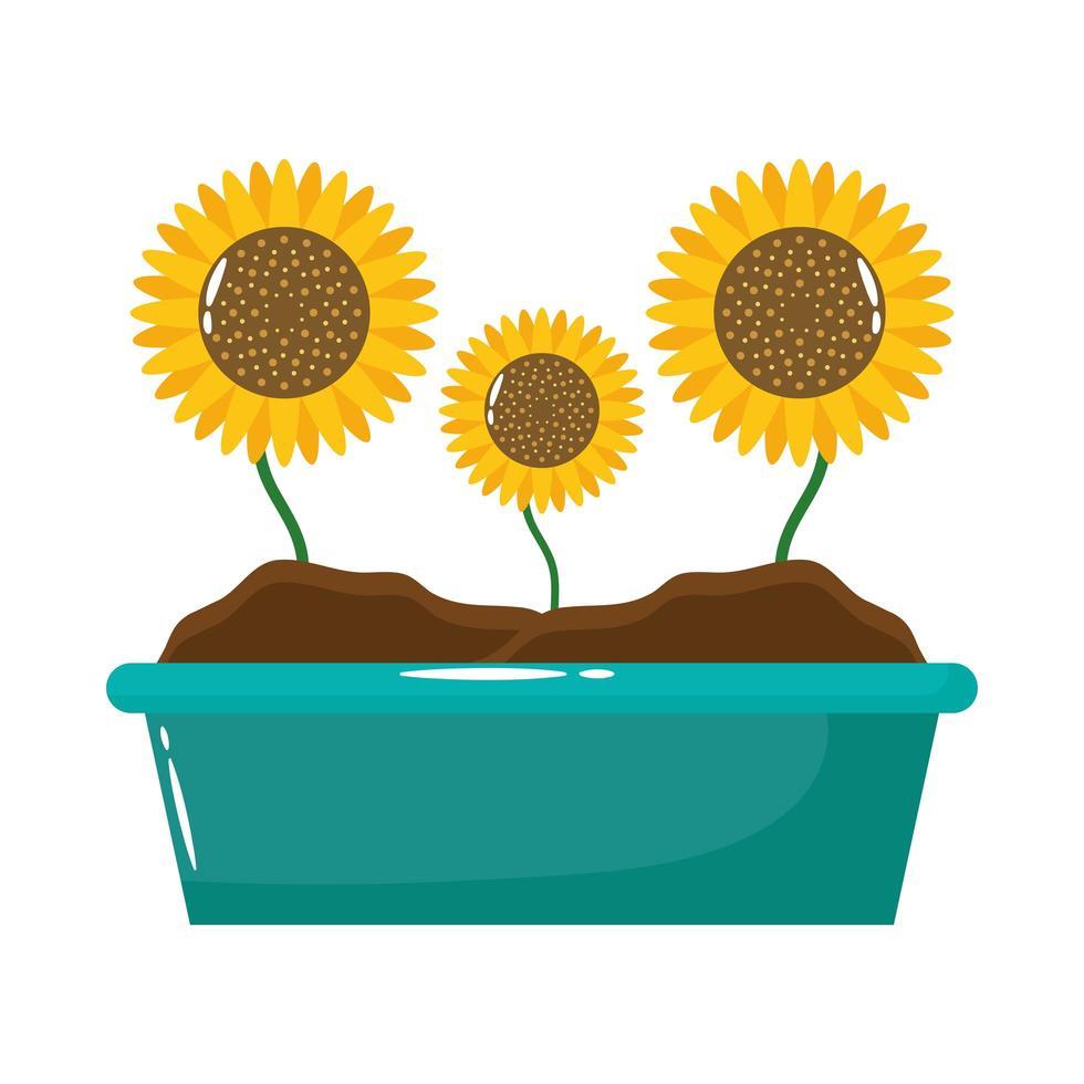 Sonnenblumen in der flachen Stilikone des Pflanzgefäßes vektor