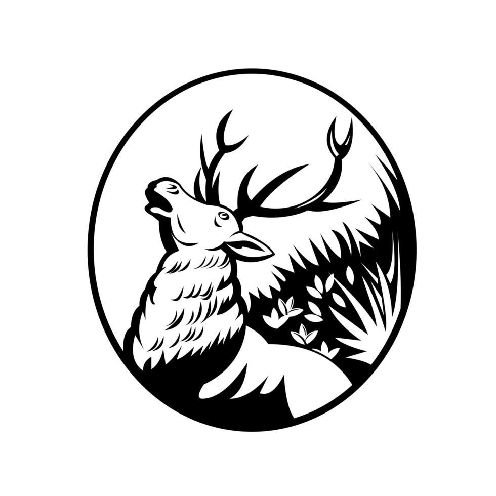 Rotwildhirsch, der im ovalen Retro der Waldseitenansicht in Schwarzweiss brüllt vektor