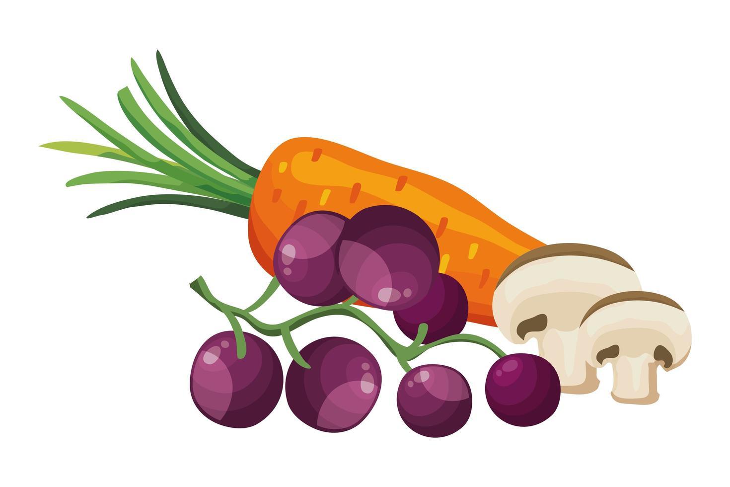 färsk morot med druvor och svamp vektor