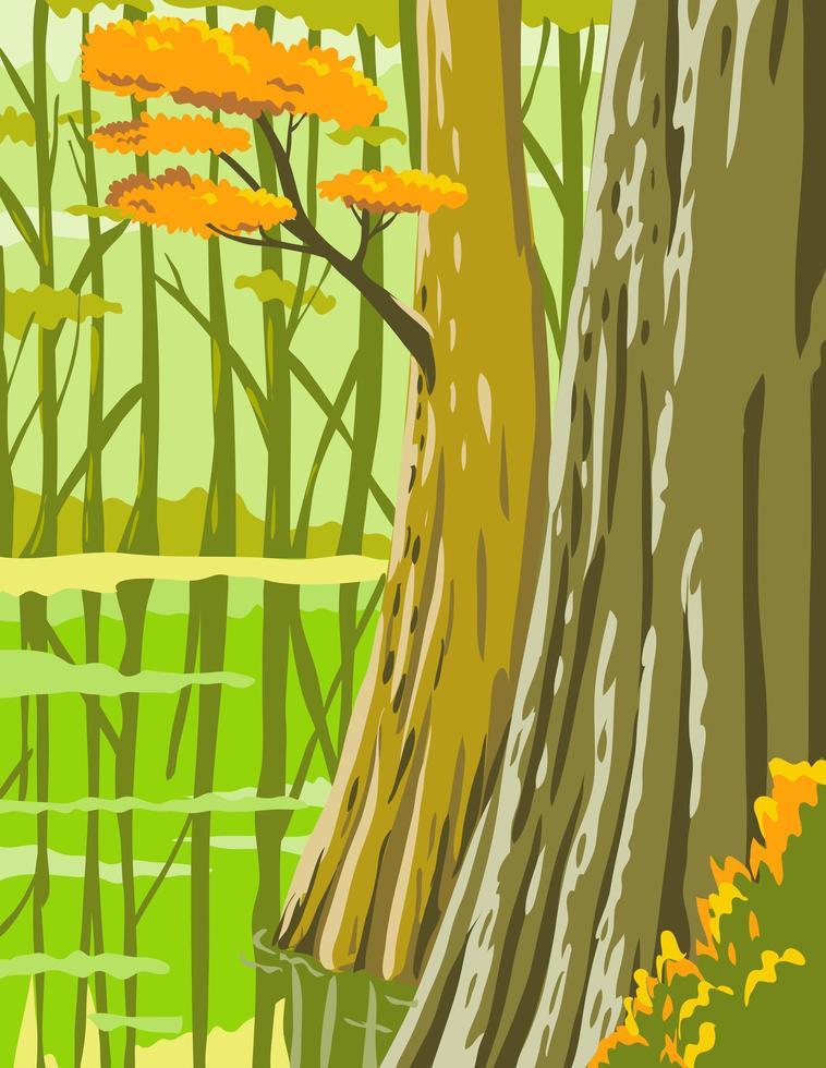 congaree nationalpark i columbia South Carolina vektor